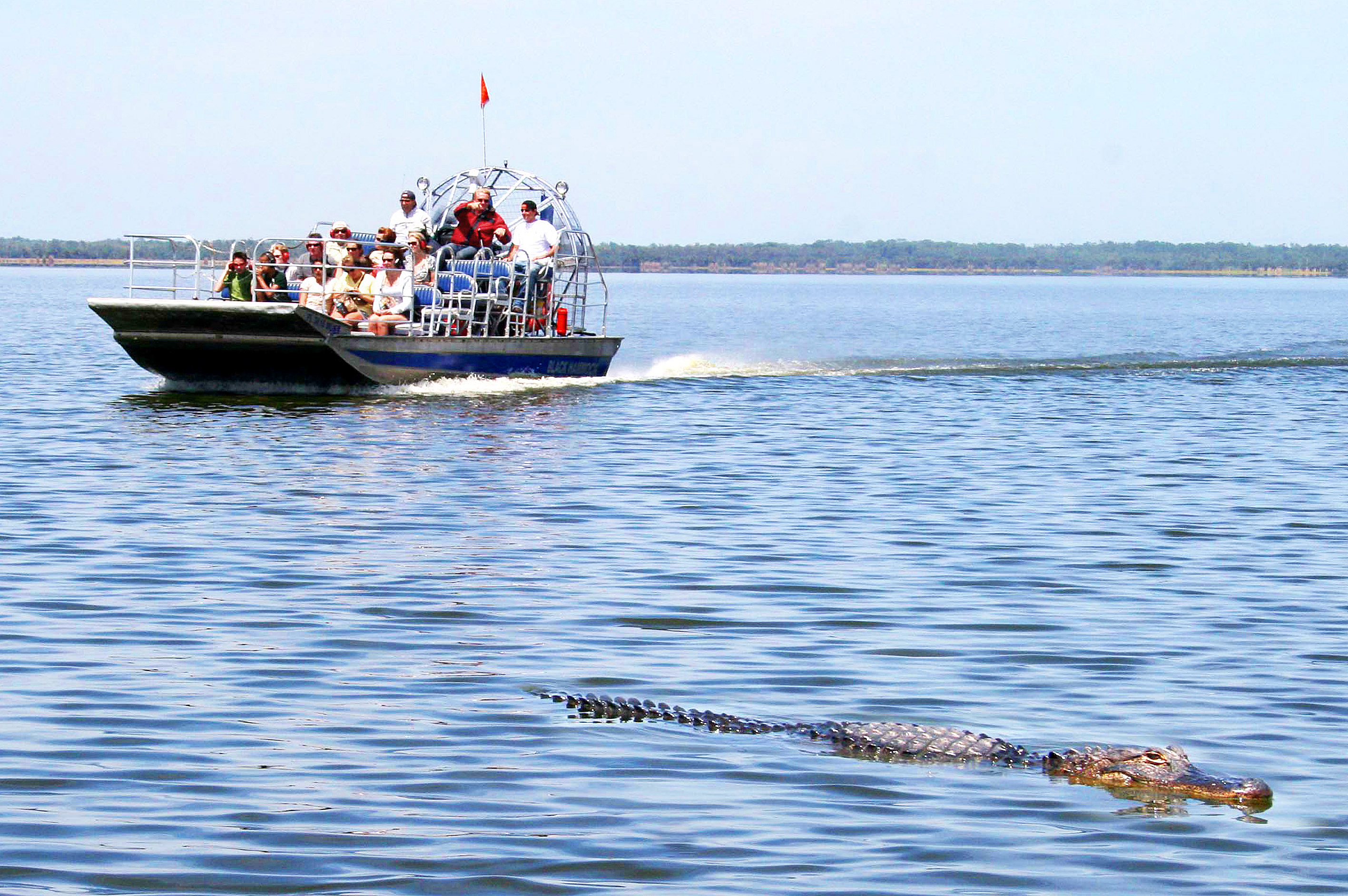 Airboat Tour in Orlando thing to do in Orlando