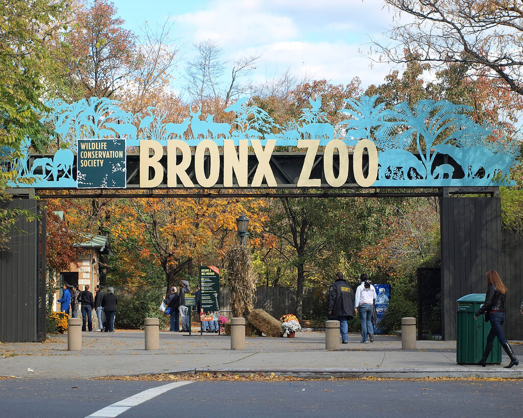 Bronx Zoo Things to do in NYC