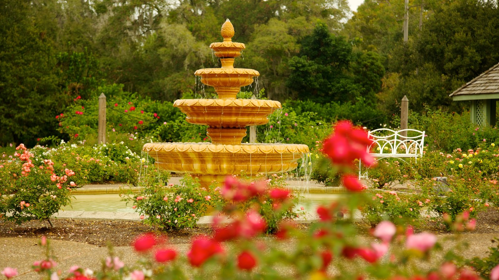 Harry P. Leu Gardens thing to do in Orlando