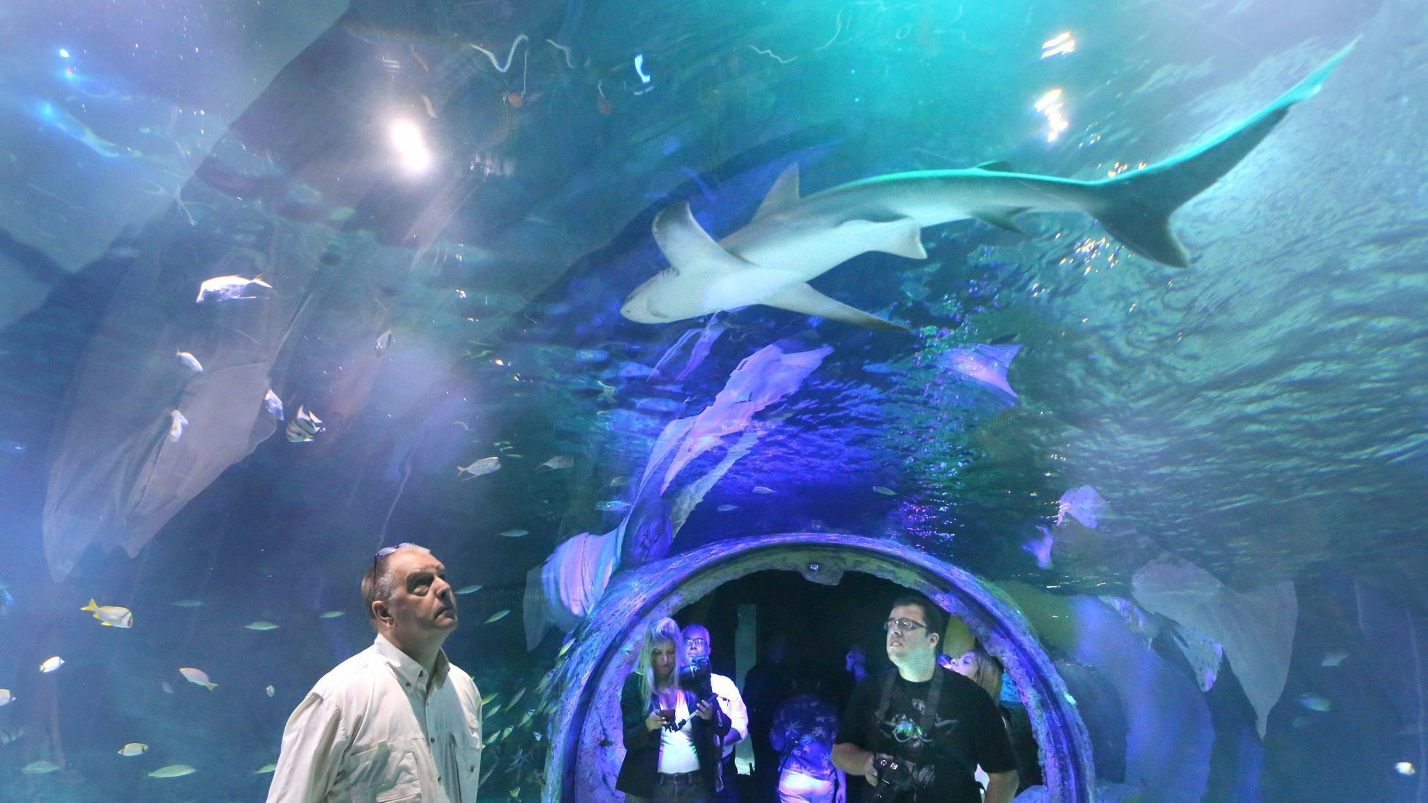 SEA Life Orlando Aquarium thing to do in Orlando