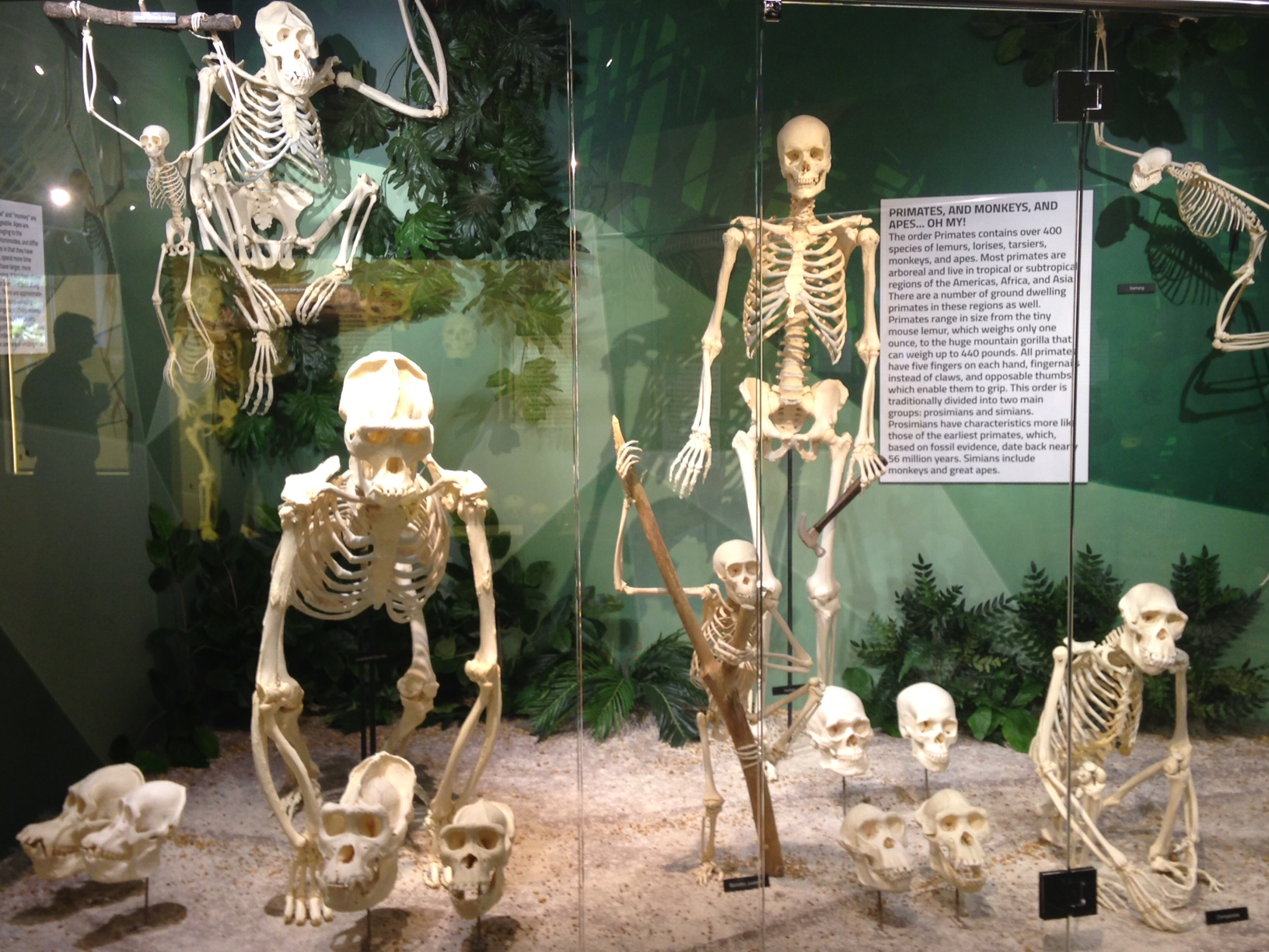 SKELETONS Animals Unveiled thing to do in Orlando