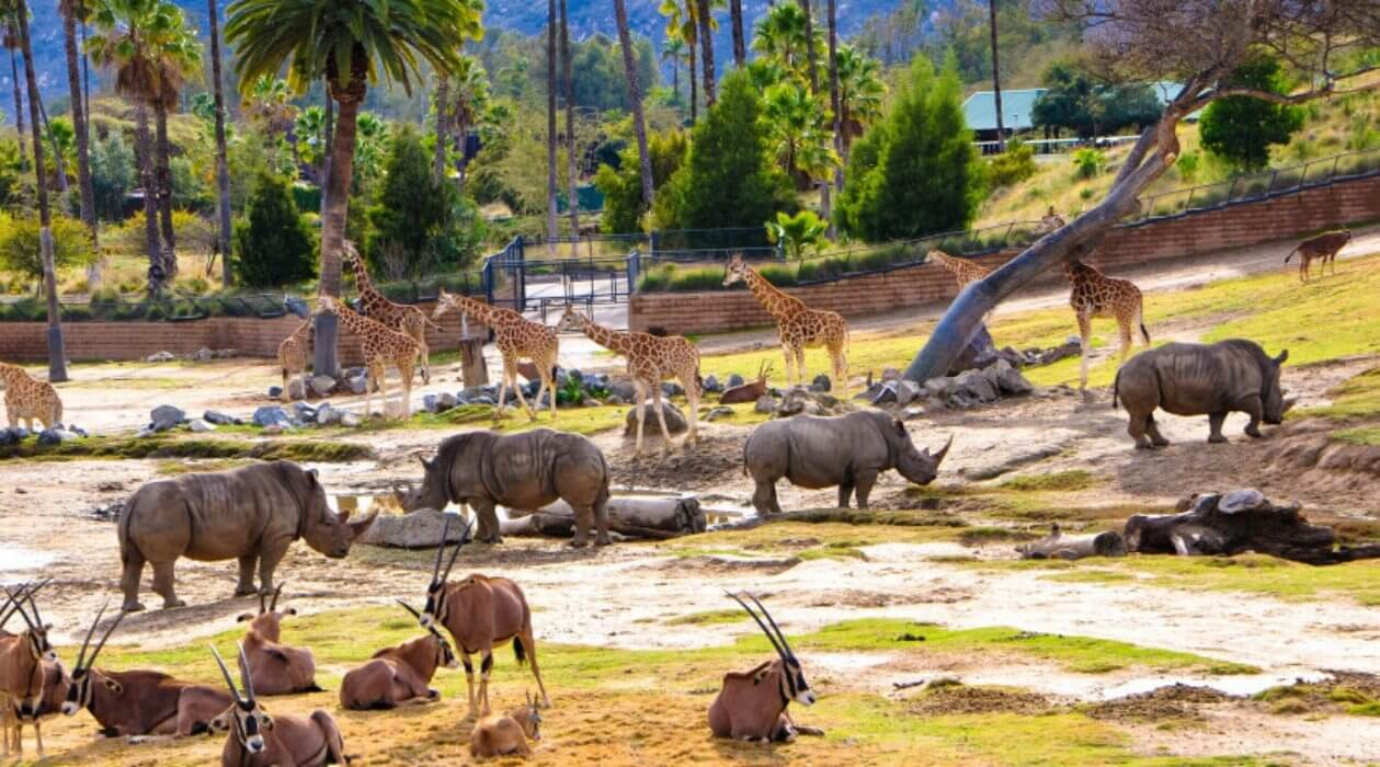 San Diego Zoo Safari Park Things to do in San Diego