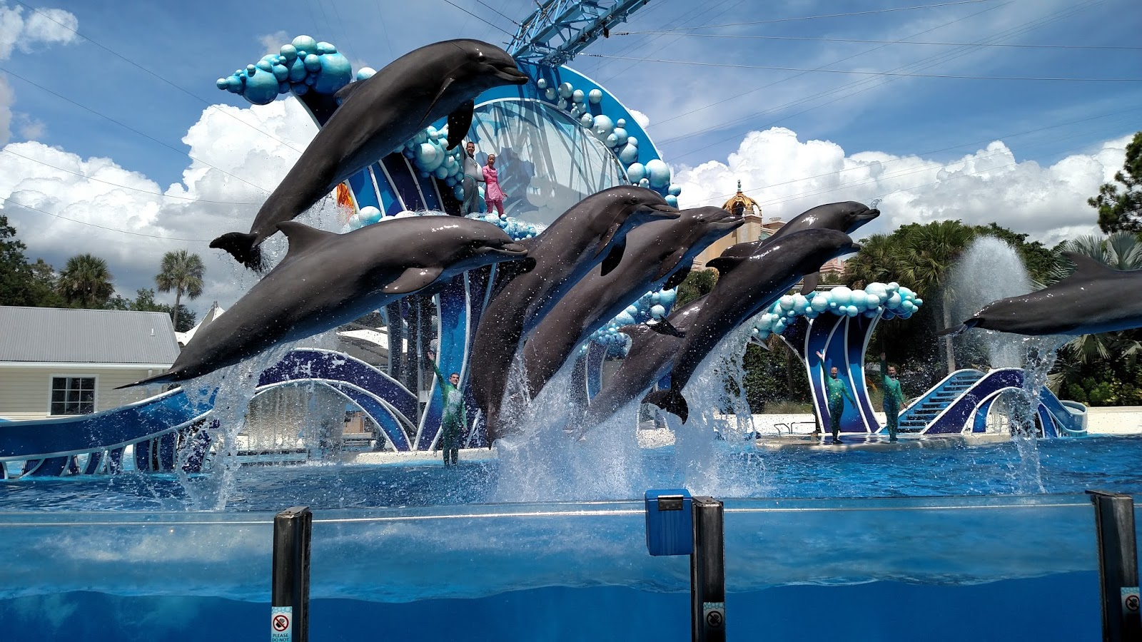 SeaWorld Orlando thing to do in Orlando