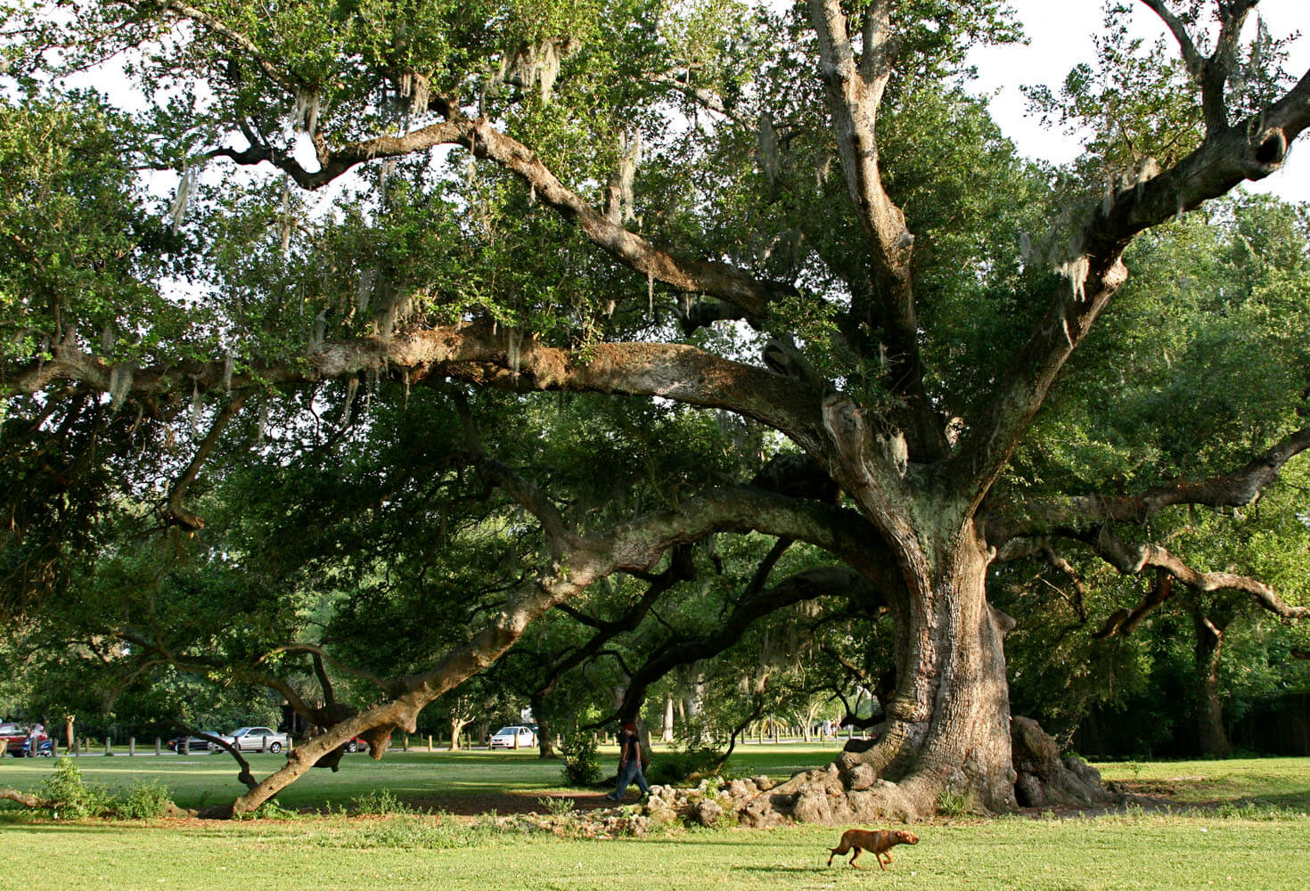 Tree of Life Things to do in New Orleans