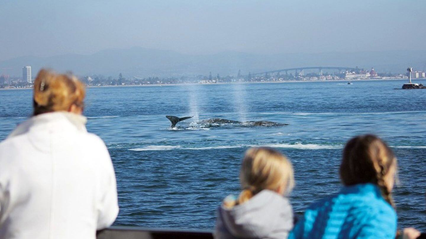 Whale Watching Things to do in San Diego