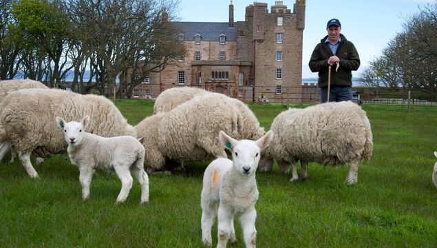 CASTLE OF MEY'S COWS AND SHEEP ($3.8 MILLION USD) | World's Richest Animals And Pets Ever