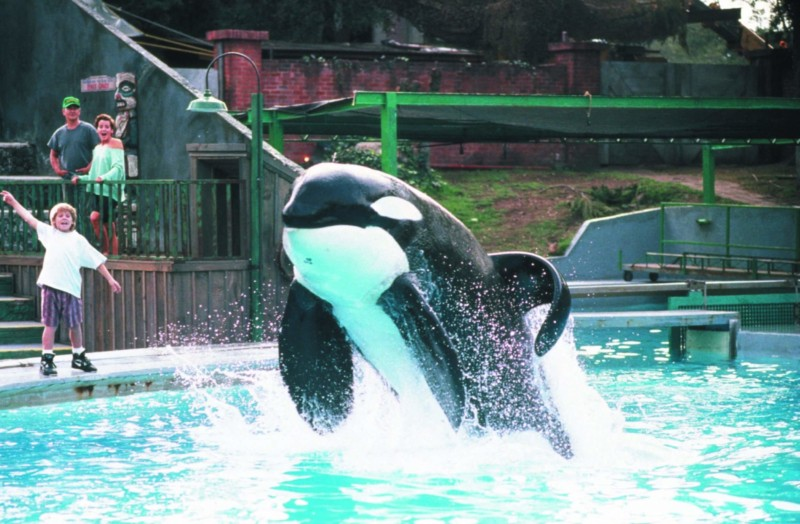 KEIKO (ORCA) ($36 MILLION USD) | World's Richest Animals And Pets Ever