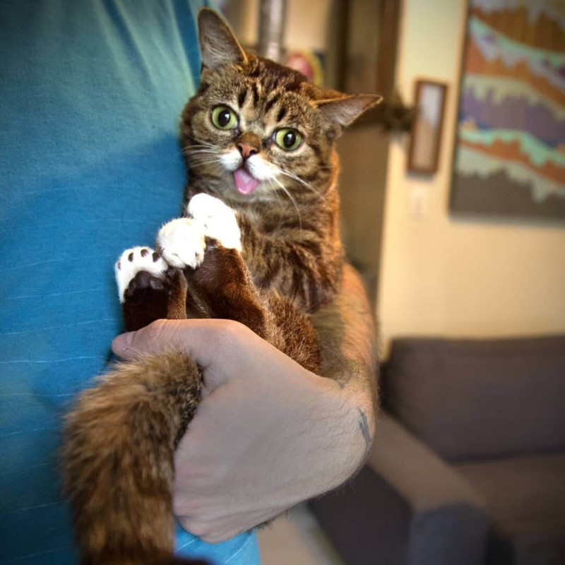 LIL BUB ($1 MILLION USD) | World's Richest Animals And Pets Ever