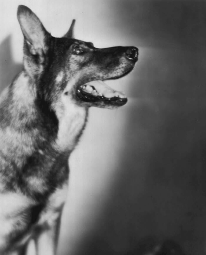 RIN TIN TIN ($26,000 USD) | World's Richest Animals And Pets Ever