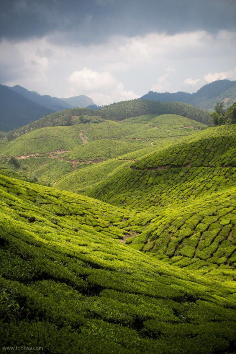 Munnar, Kerala Best Honeymoon Destinations