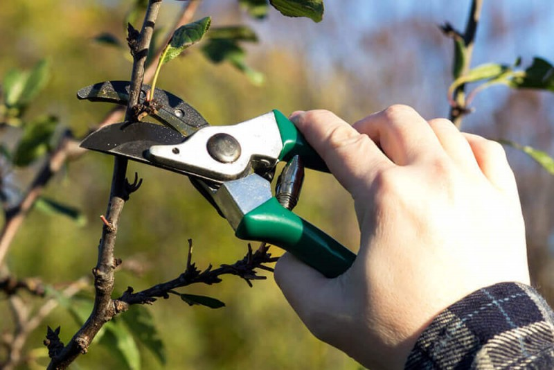 Pruning scissor Best Garden Tools and Accessories