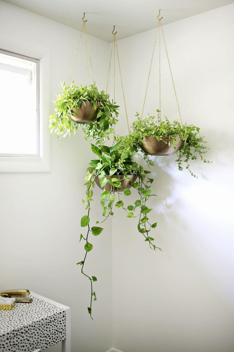 English Ivy Hanging Plants